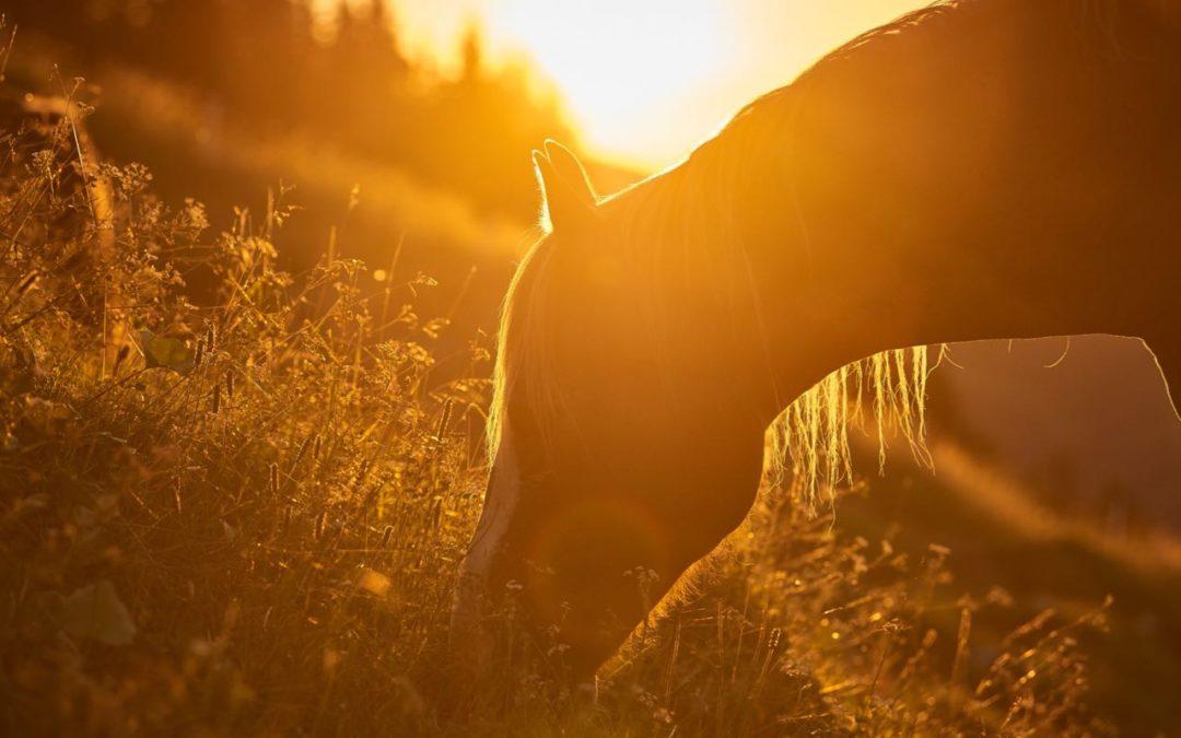 Vom Mädchen zur jungen Frau – Ein Übergangsritual mit Pferden – Teil 4