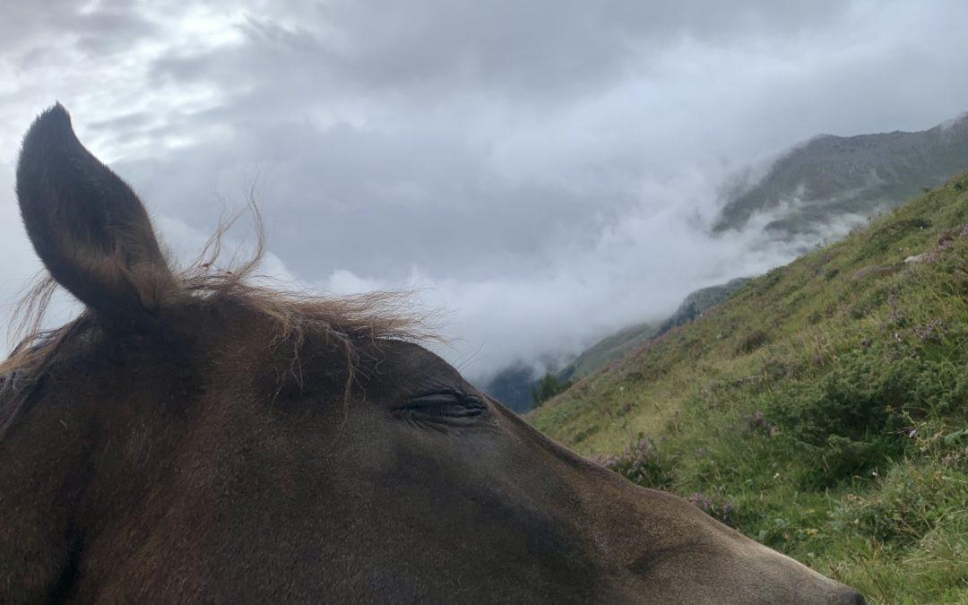 Out in the Wild – mit einem Pferd – gebucht